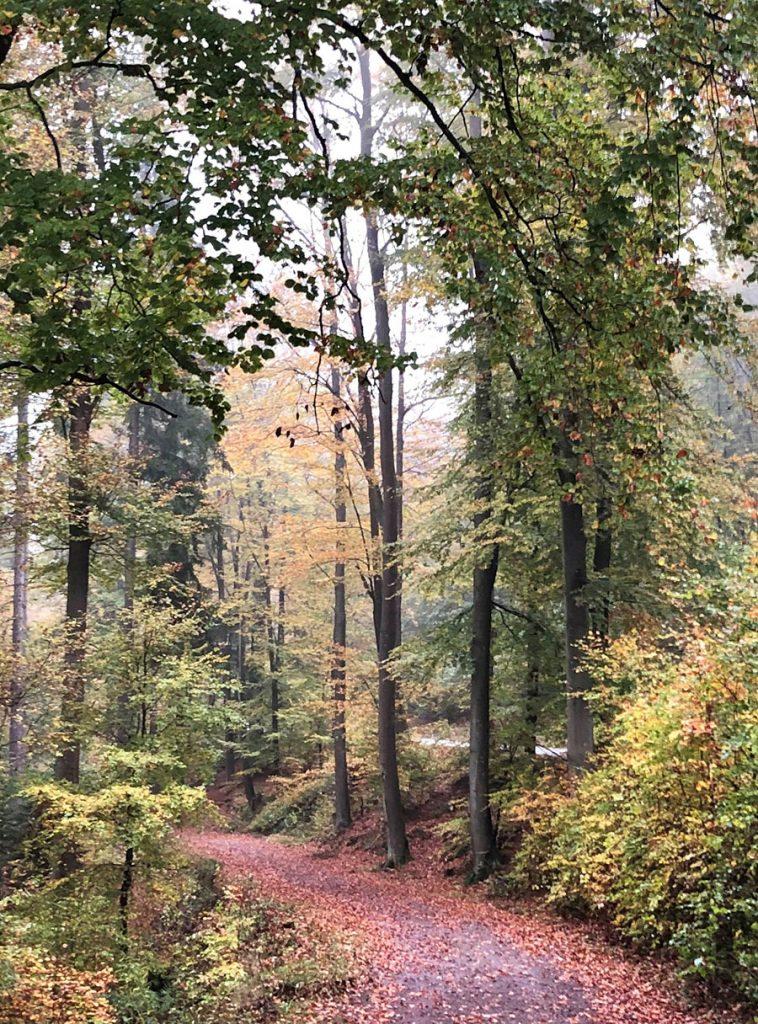 Harry-Clark-Farben-Blick-in-Baumkronen-Wald